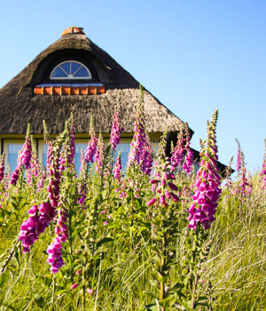 Ferienhaus am Nordseestrand