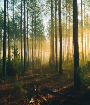 Schöne Momente im Bayerischen Wald