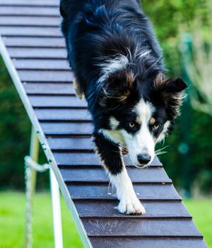 Abwechslungsreicher Urlaub mit Hund